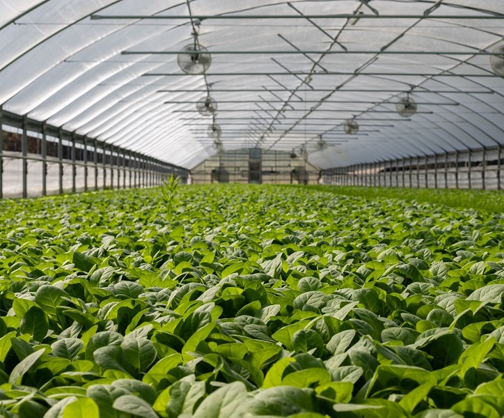 The Green EU Deal – why using less fertilizers does not mean less or lower quality crop