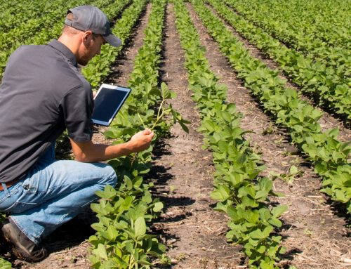 What is smart agriculture and why smart agriculture is the future?