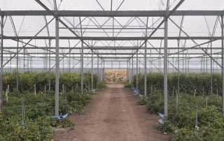 Precision irrigation, fertigation and climate control with ONDO | Roseland greenhouses case study