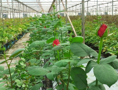 We're sharing with you the first results of the farms using ONDO: 🌹 Roseland case study