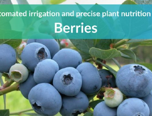 Benefits of using ONDO for growing berries (new brochure!)