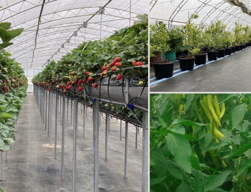 In our new case study: Greenhouse complex Angel Metlarov reduces human resources used and minimizes human error with ONDO